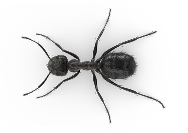 Indoor-Ant-Top